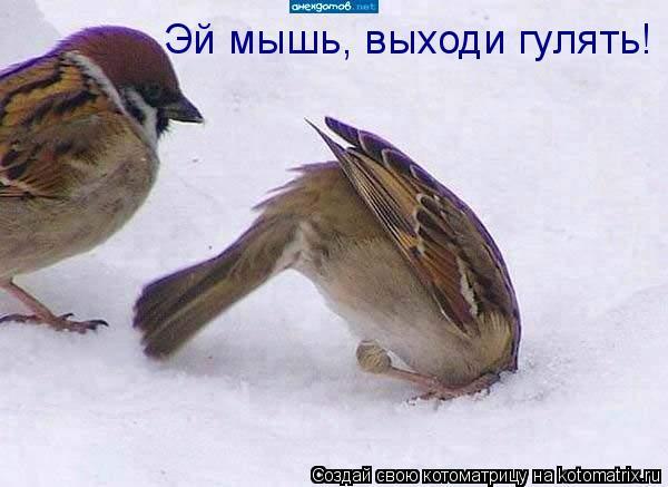 Котоматрица: Эй мышь, выходи гулять!