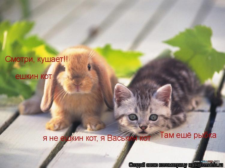 Котоматрица: Смотри, кушает!! Там ешё рыбка ешкин кот я не ешкин кот, я Васькин кот