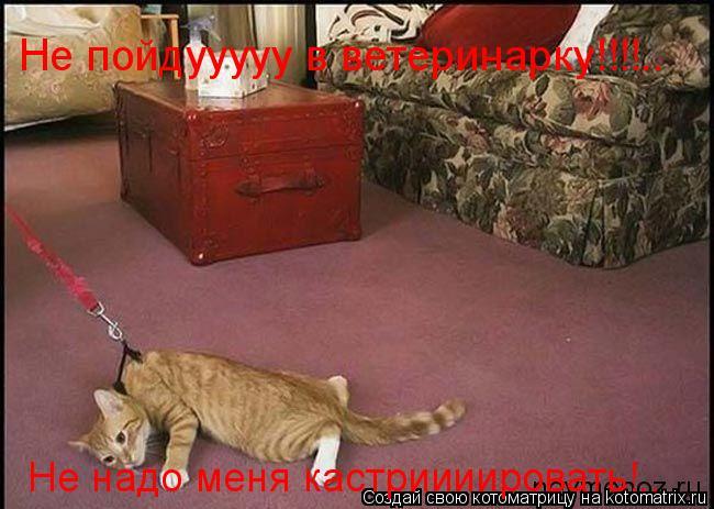 Котоматрица: Не пойдууууу в ветеринарку!!!!.. Не надо меня кастриииировать!..