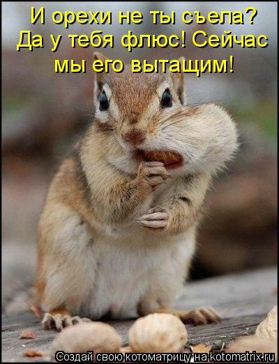 Котоматрица: И орехи не ты съела?  Да у тебя флюс! Сейчас  мы его вытащим!