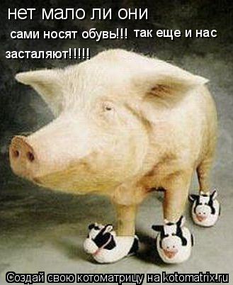 Котоматрица: нет мало ли они сами носят обувь!!! так еще и нас  засталяют!!!!!
