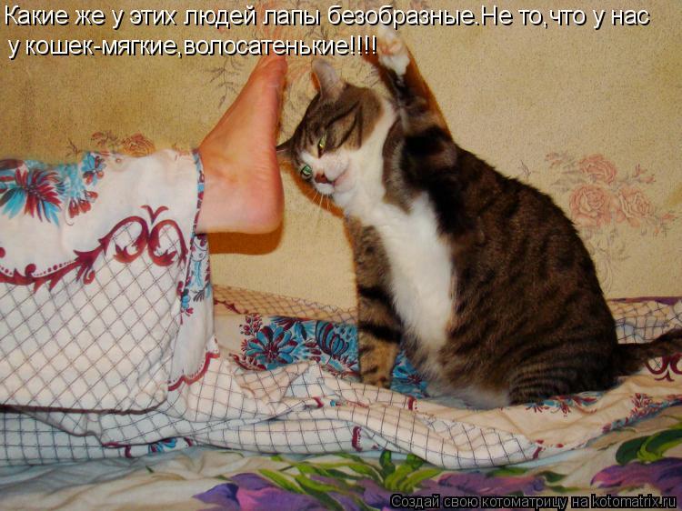 Котоматрица: Какие же у этих людей лапы безобразные.Не то,что у нас у кошек-мягкие,волосатенькие!!!!