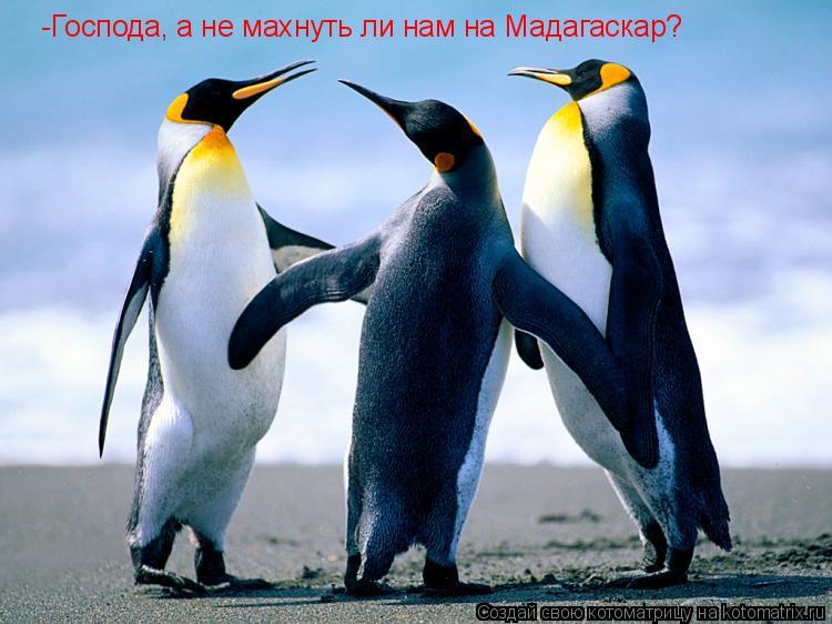 Котоматрица: -Господа, а не махнуть ли нам на Мадагаскар?