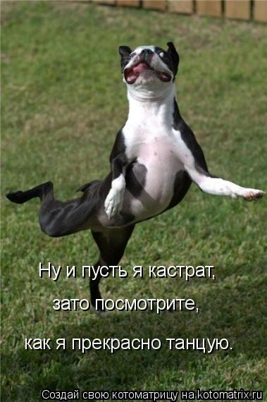 Котоматрица: Ну и пусть я кастрат, зато посмотрите, как я прекрасно танцую.
