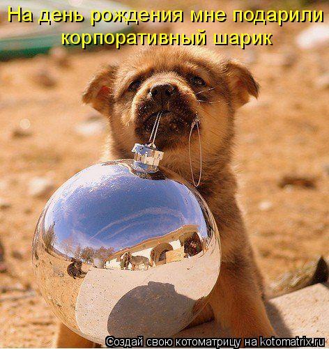 Котоматрица: На день рождения мне подарили  корпоративный шарик