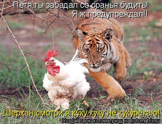 Котоматрица: -Петя,ты забадал со сранья будить! Я ж предупреждал!! -Шерхан,смотри,я куку куку не кукурекаю!