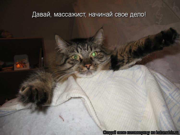 Котоматрица: Давай, массажист, начинай свое дело!