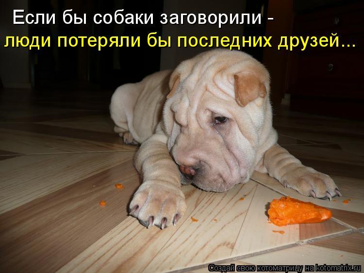 Котоматрица: Если бы собаки заговорили - люди потеряли бы последних друзей...