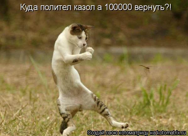 Котоматрица: Куда полител казол а 100000 вернуть?!