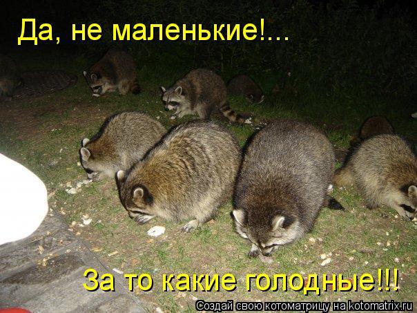 Котоматрица: Да, не маленькие!... За то какие голодные!!!