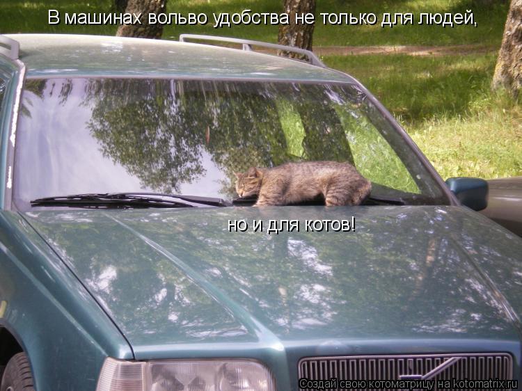 Котоматрица: В машинах вольво удобства не только для людей, но и для котов!