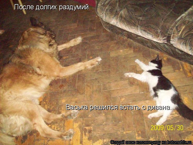 Котоматрица: После долгих раздумий Васька решился встать с дивана...
