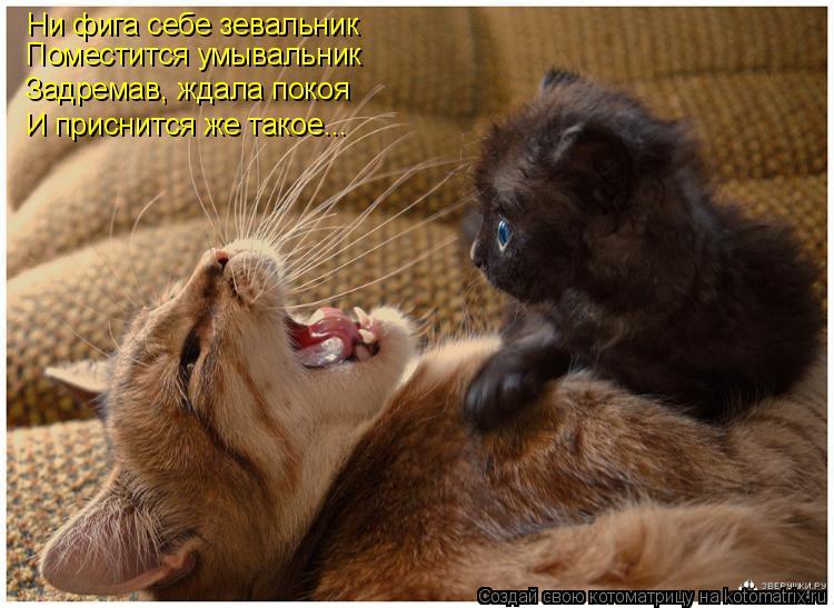 Котоматрица: Ни фига себе зевальник Поместится умывальник Задремав, ждала покоя И приснится же такое...