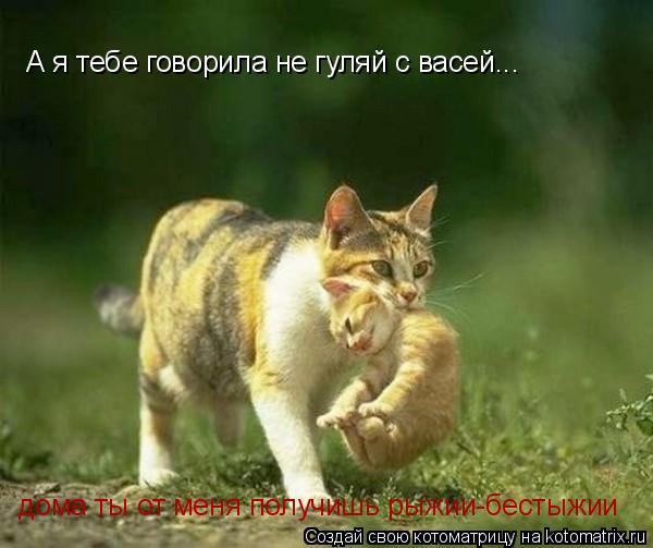 Котоматрица: А я тебе говорила не гуляй с васей... дома ты от меня получишь рыжии-бестыжии
