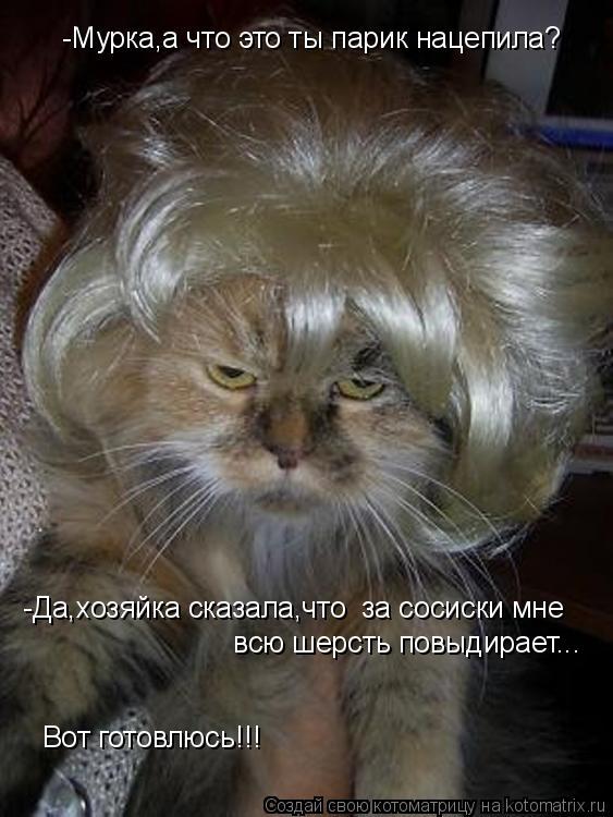 Котоматрица: -Мурка,а что это ты парик нацепила?  -Да,хозяйка сказала,что  за сосиски мне  всю шерсть повыдирает...  Вот готовлюсь!!!