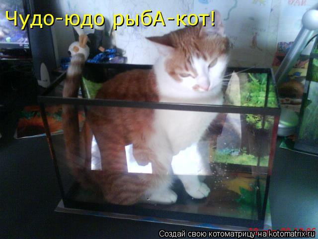 Котоматрица: Чудо-юдо рыбА-кот!