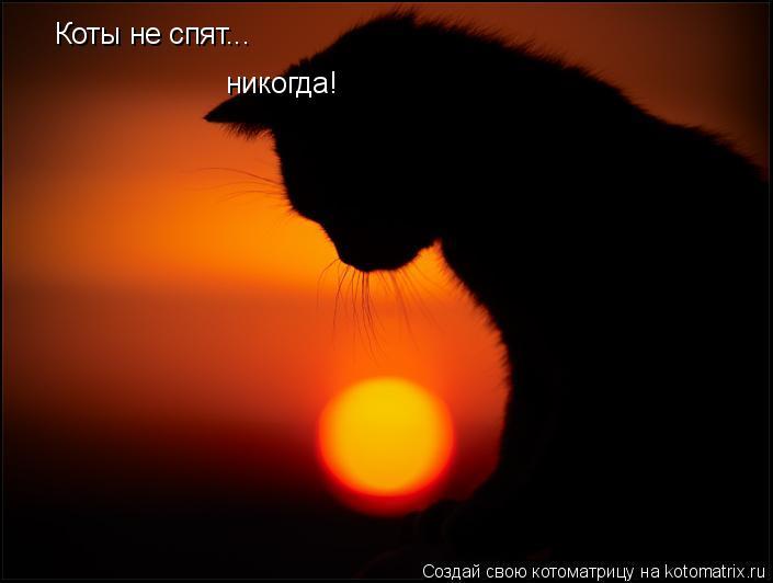Котоматрица: Коты не спят... никогда!
