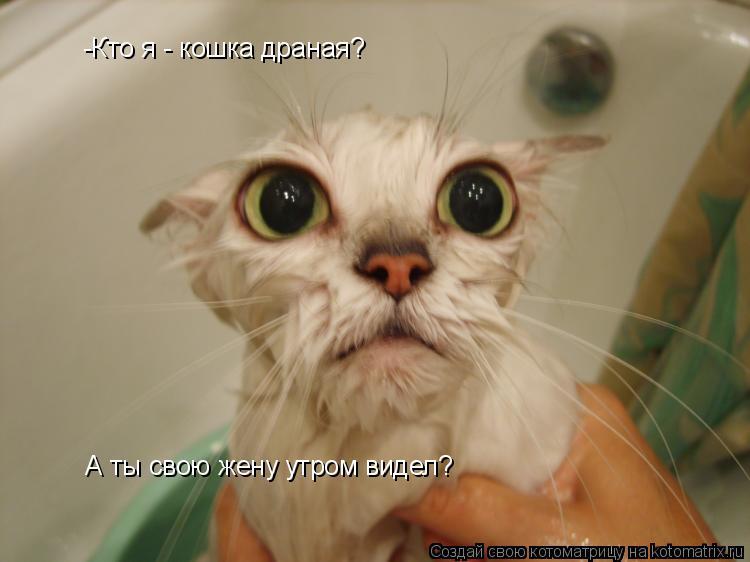 Котоматрица: -Кто я - кошка драная?  А ты свою жену утром видел?