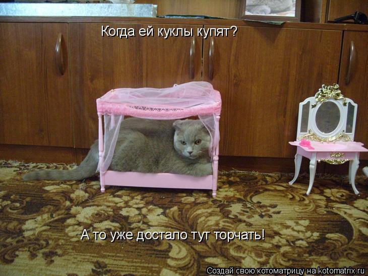 Котоматрица: Когда ей куклы купят? А то уже достало тут торчать!