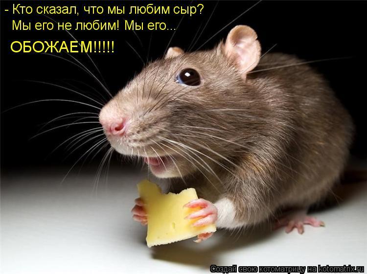 Котоматрица: - Кто сказал, что мы любим сыр? Мы его не любим! Мы его... ОБОЖАЕМ!!!!!
