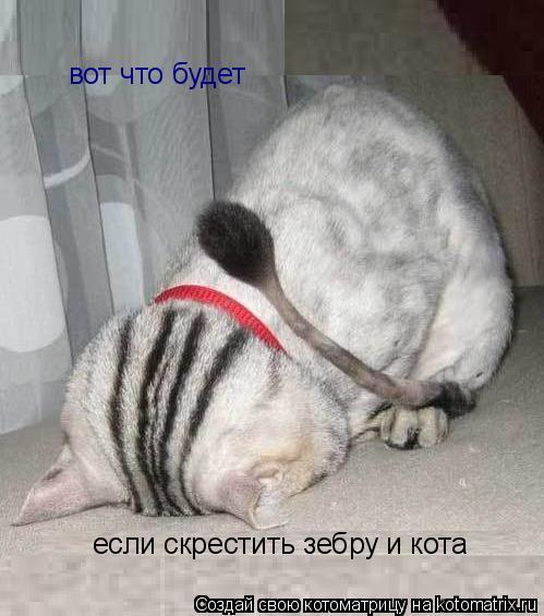 Котоматрица: вот что будет  если скрестить зебру и кота