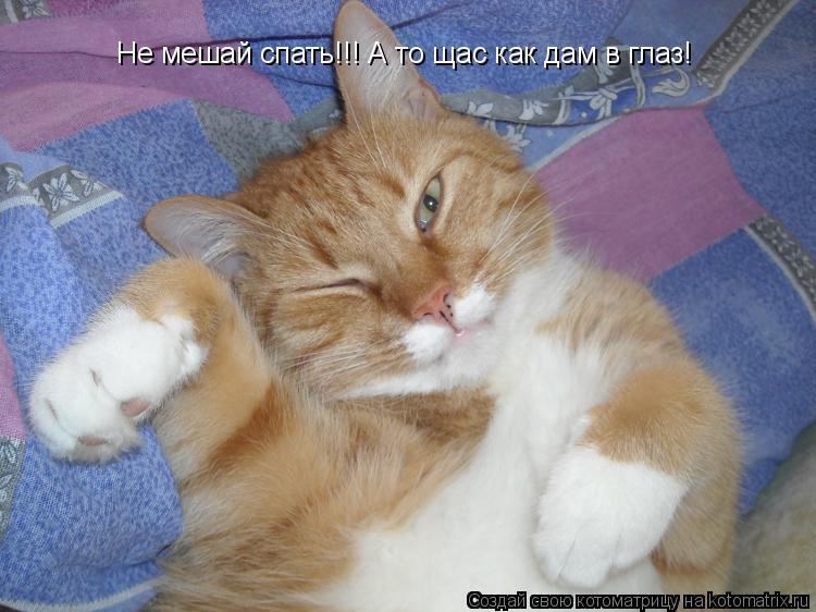 Котоматрица: Не мешай спать!!! А то щас как дам в глаз!