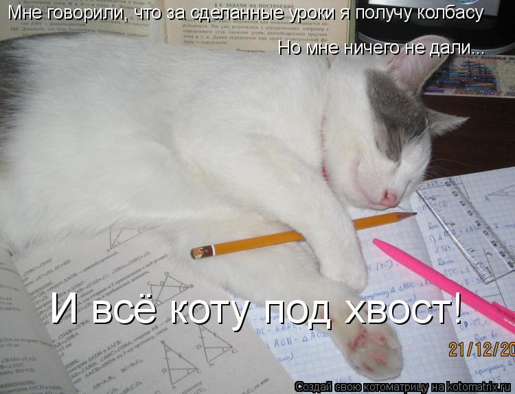 Котоматрица: Мне говорили, что за сделанные уроки я получу колбасу Но мне ничего не дали... И всё коту под хвост!