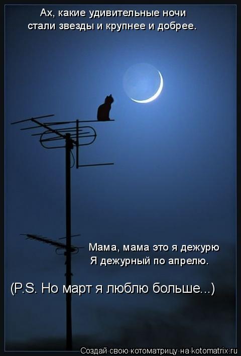 Котоматрица: Ах, какие удивительные ночи стали звезды и крупнее и добрее. Мама, мама это я дежурю Я дежурный по апрелю. (P.S. Но март я люблю больше...)