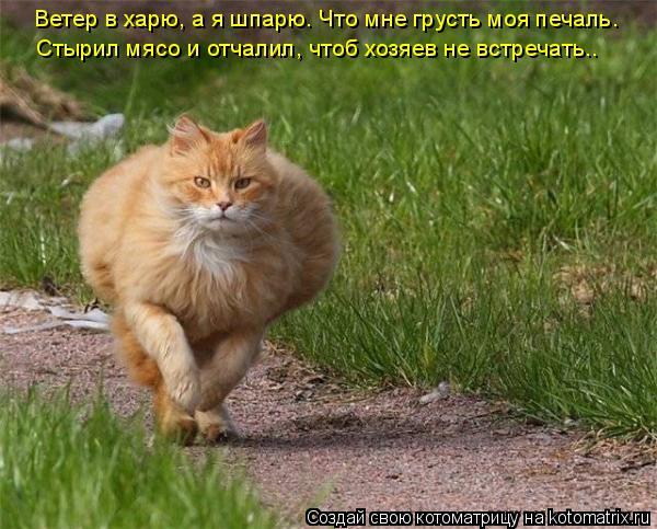Котоматрица: Ветер в харю, а я шпарю. Что мне грусть моя печаль. Стырил мясо и отчалил, чтоб хозяев не встречать..
