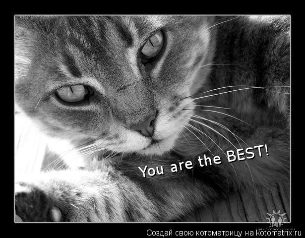 Котоматрица: You are the BEST!