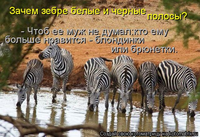 Котоматрица: Зачем зебре белые и черные полосы? - Чтоб ее муж не думал:кто ему  больше нравится - блондинки или брюнетки.