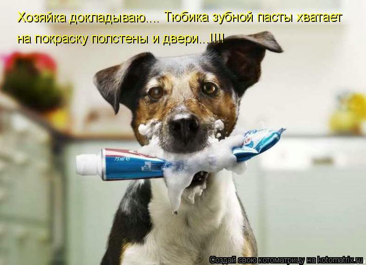 Котоматрица: Хозяйка докладываю.... Тюбика зубной пасты хватает на покраску полстены и двери...!!!!