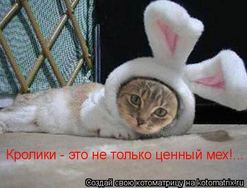 Котоматрица: Кролики - это не только ценный мех!...