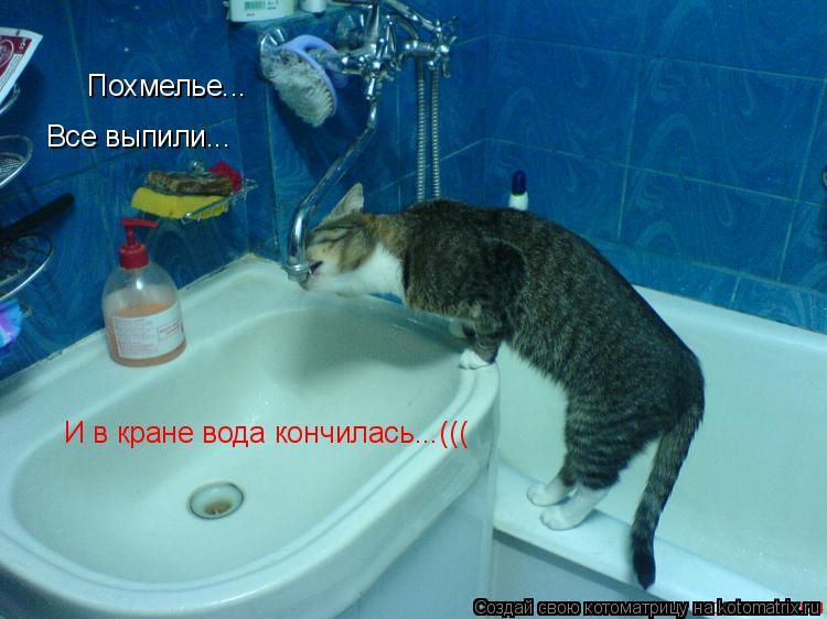 Котоматрица: Похмелье... И в кране вода кончилась...((( Все выпили...
