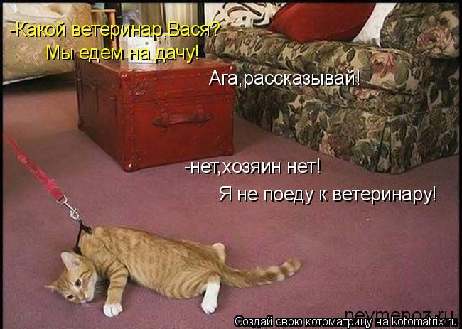 Котоматрица: -нет,хозяин нет! Я не поеду к ветеринару! -Какой ветеринар,Вася? Мы едем на дачу! Ага,рассказывай!