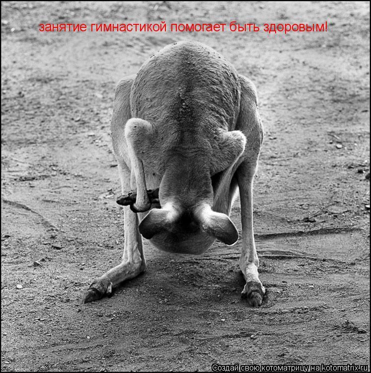 Котоматрица: занятие гимнастикой помогает быть здоровым!
