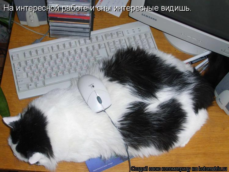 Котоматрица: На интересной работе и сны интересные видишь.
