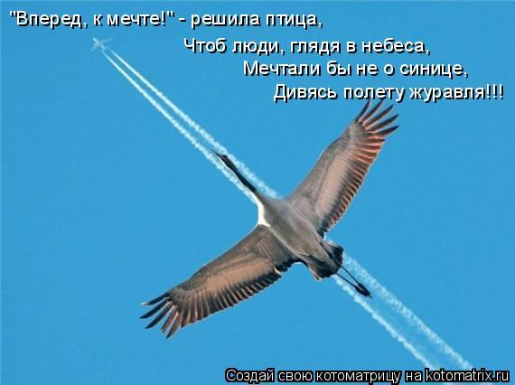 """Котоматрица: """"Вперед, к мечте!"""" - решила птица, Чтоб люди, глядя в небеса, Мечтали бы не о синице,  Дивясь полету журавля!!!"""