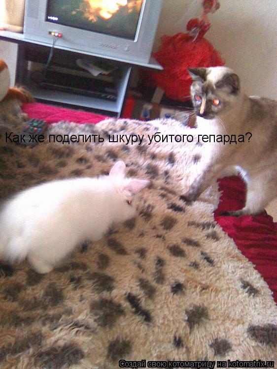 Котоматрица: Как же поделить шкуру убитого гепарда?