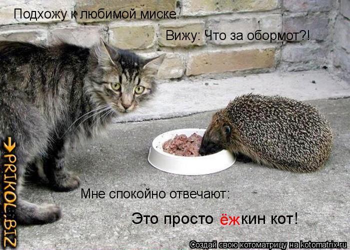 Котоматрица: Подхожу к любимой миске. Вижу: Что за обормот?! Мне спокойно отвечают: Это просто      кин кот! ёж