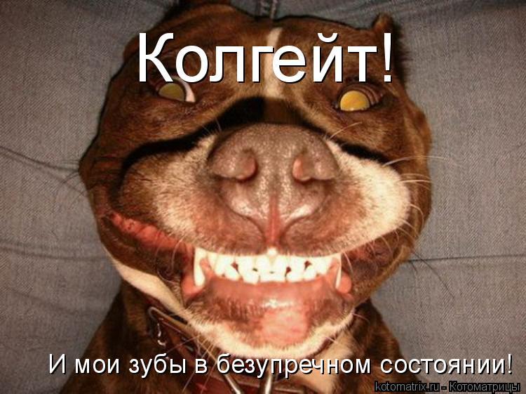 Котоматрица: Колгейт! И мои зубы в безупречном состоянии!