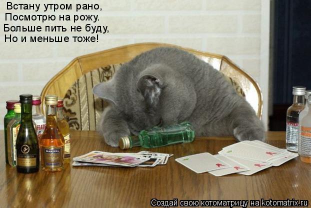 Котоматрица: Встану утром рано, Посмотрю на рожу. Больше пить не буду, Но и меньше тоже!