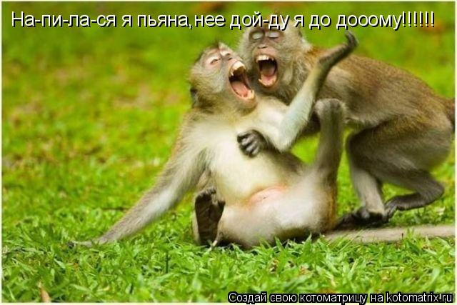 Котоматрица: На-пи-ла-ся я пьяна,нее дой-ду я до дооому!!!!!!