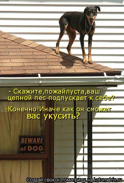 Котоматрица: цепной пес подпускает к себе? - Скажите,пожайлуста,ваш -Конечно!Иначе как он сможет вас укусить?