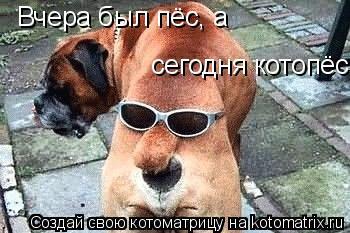 Котоматрица: Вчера был пёс, а сегодня котопёс.