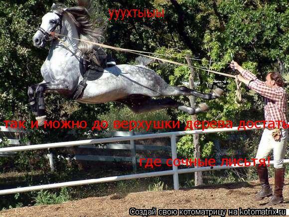 Котоматрица: ууухтыыы так и можно до верхушки дерева достать где сочные лисьтя!