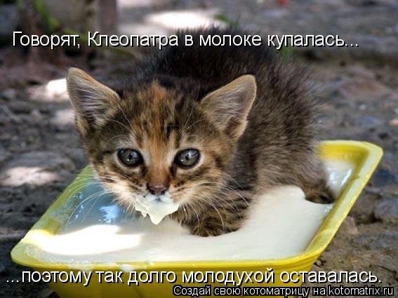 Котоматрица: Говорят, Клеопатра в молоке купалась... ...поэтому так долго молодухой оставалась.
