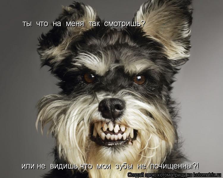 Котоматрица: ты  что  на  меня  так  смотришь? или не  видишь,что  мои  зубы  не  почищенны?!