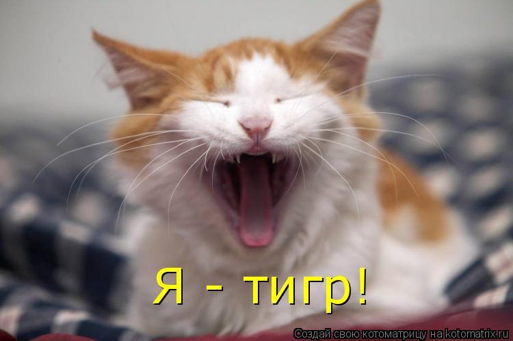 Котоматрица: Я - тигр!