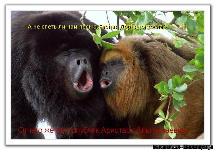 Котоматрица: А не спеть ли нам песню,Гарпия Дормидонтовна? Отчего же нет,голубчик,Аристарх Альгуджаевич!